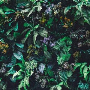 Vegetal, panneau de douche, nature